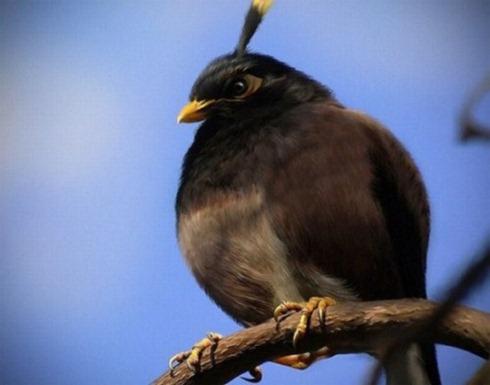 Real-Life-Angry-Birds-004