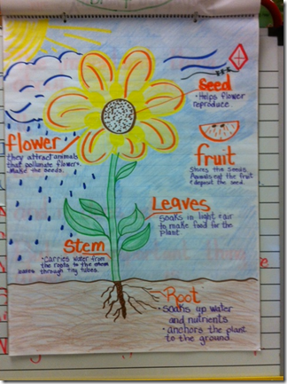 anchor chart plants