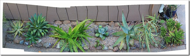 120703_succ_bed_by_pano_with_gravel
