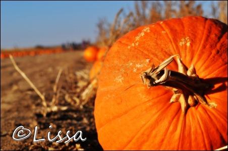pumpkinstemwatermark