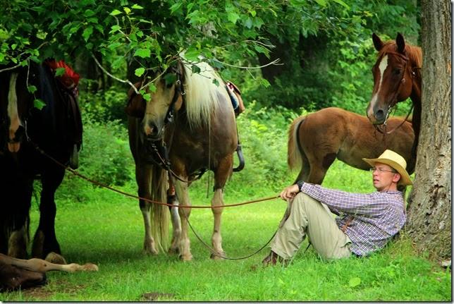 restinghorses