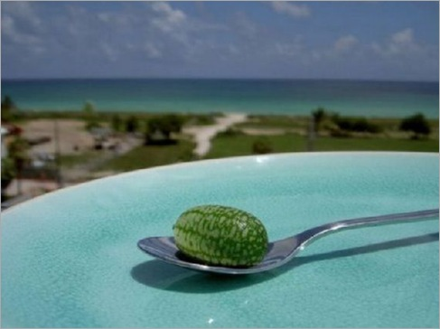 world smallest watermelon