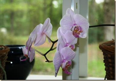 orchid2 3-8-12