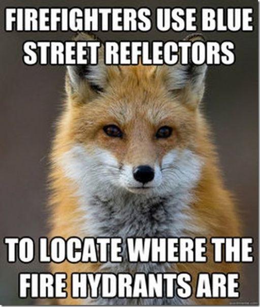 fox-facts-meme-3
