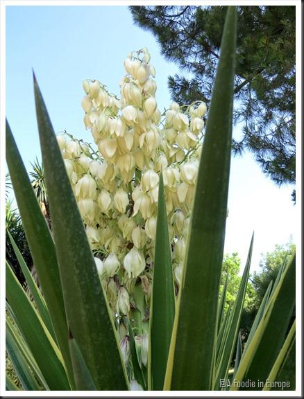 succulent flowers 3