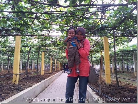 Ladang Anggur Tasik Beris 5