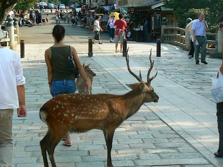 Nara: deer