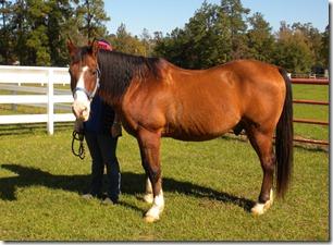 horse camp 051
