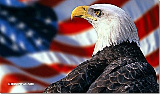 American (Bald) Eagle - US Flag Background