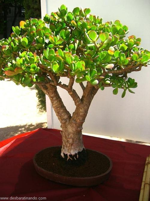 bonsais arvores em miniatura desbaratinando (47)