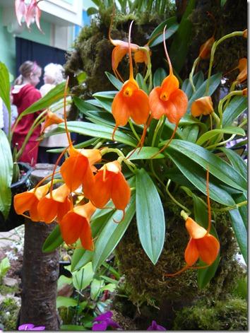 orchids9
