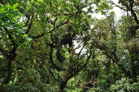 Obiective turistice Costa Rica: In Padurea Tropicala Monteverde