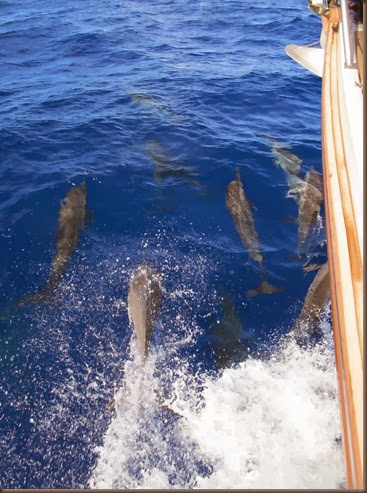 sailing siargao island dolphins at the bow 2