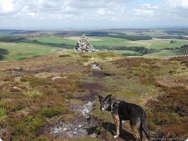bruno on bolt's law summit