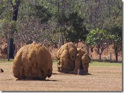 Termite Mounds MAreeba Rodeo