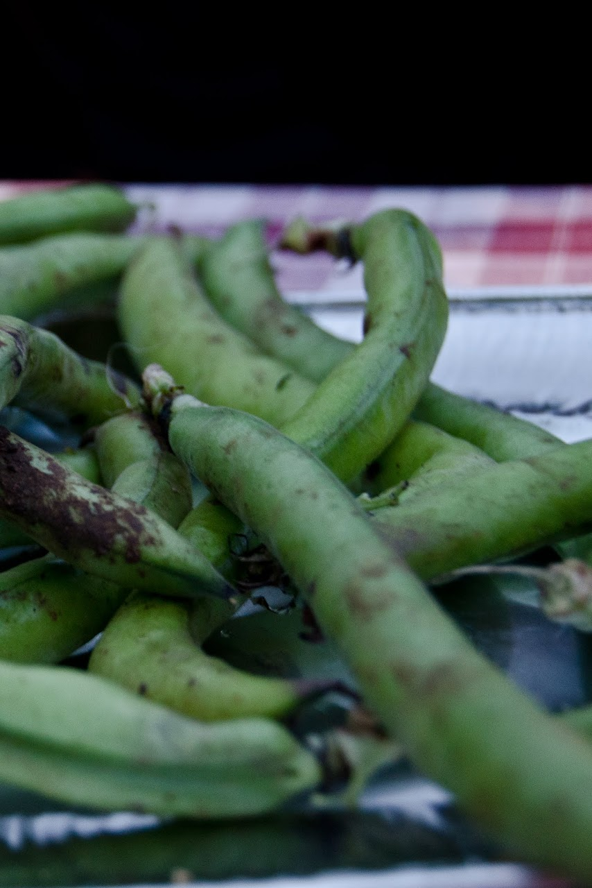 Fava beans at St. George festival
