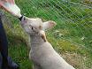 Lambs in school 2011 004.jpg