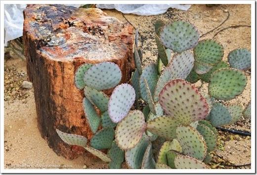 141231_Tucson_Bachs_0069