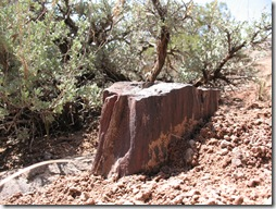 2012-04-15 Petrified Wood, Fry Canyon, UT (33)