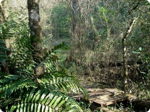 Parque Provincial Araucaria en San Pedro8