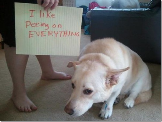 dog-shaming-bad-26