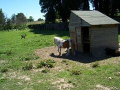 2011.07.01-028 parc animalier