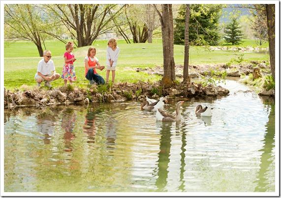 Duck_Pond_1