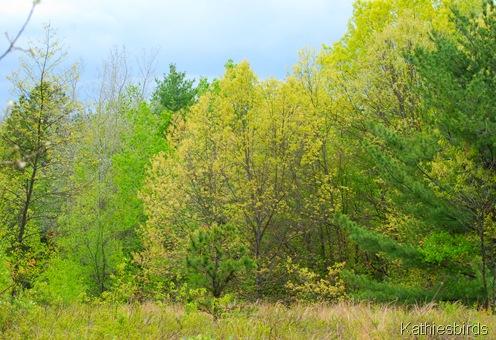 18. trees-kab