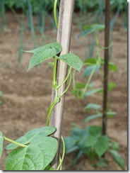 garden 2012 013