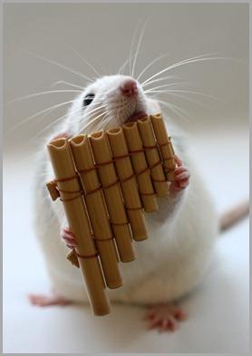 009_white_rats1-1329