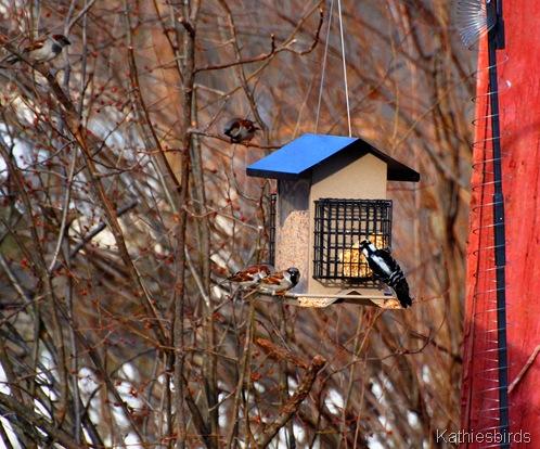 3. Feeder birds-kab
