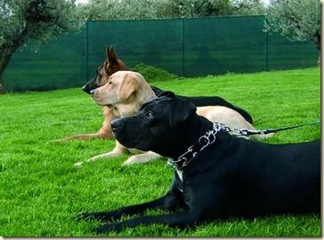 adiestramiento canino-q