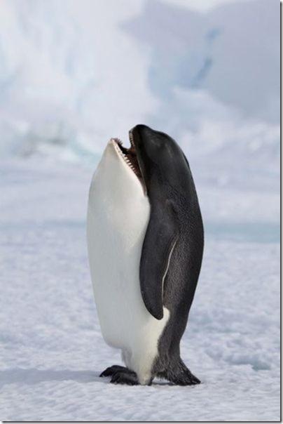 hybrid-animals-photoshop-1