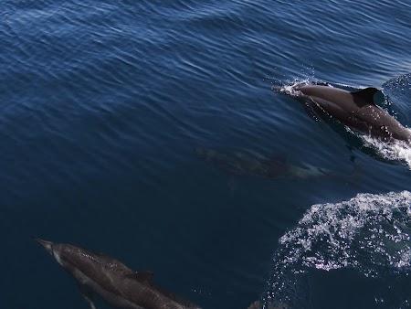 25. Delfini sarind.JPG