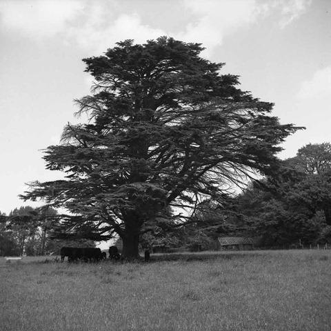 The-Tree-18