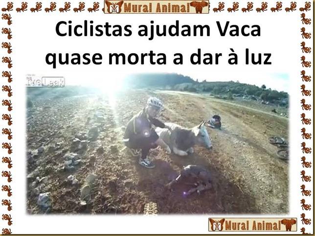 Ciclistas ajudam Vaca