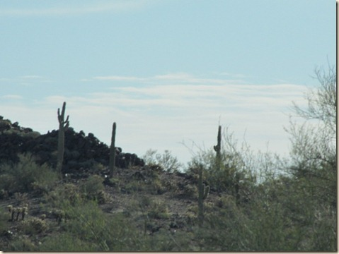Yuma to Tucson 006