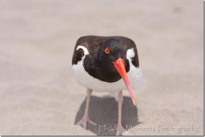 Beach Bird 8_sm