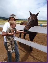 horse rescue 062