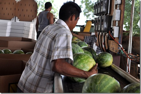 watermelons 11 0705 (36)