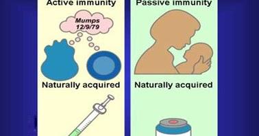 IMMUNOLOGY DEN: Elements of Immunity: Acquired Immunity