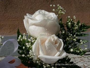 Flores-ETbM-0711