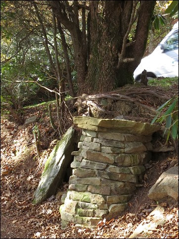 blocks to hold up tree on trail at Brasstown Bald