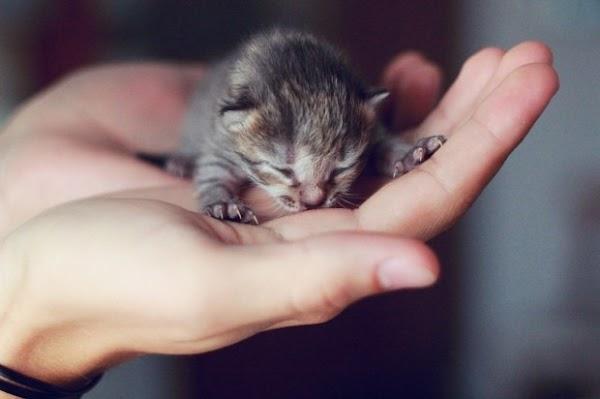 fotos animais gatinho[3].jpg