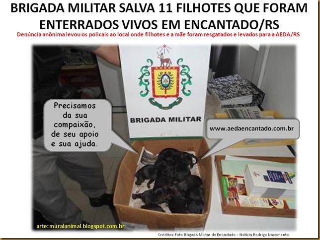 BRIGADA MILITAR SALVA 11 FILHOTES QUE FORAM ENTERRADOS