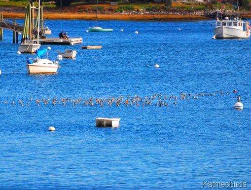 5. cormorants