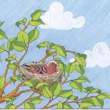 pájaros 003.jpg