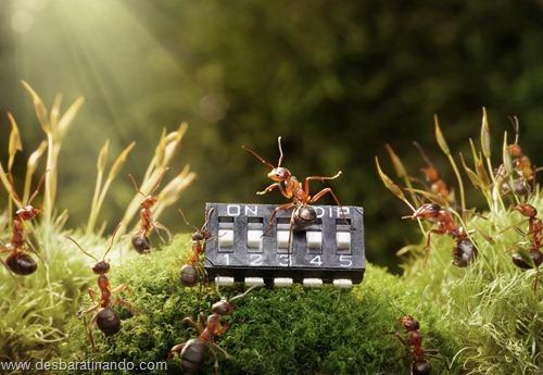 formigas inacreditaveis incriveis desbaratinando  (43)