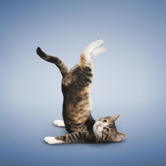 Da_Borris_kitten_2.png
