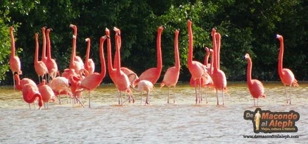 Viaje Celestún Yucatan 4